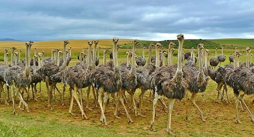 Ostrich Effect and your investment decisions